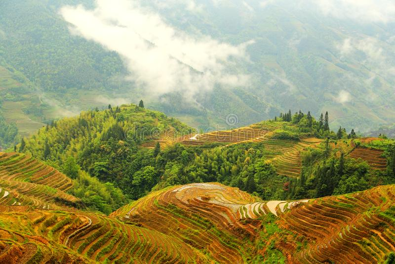 Gisement de riz de terrasse de Longji photos libres de droits