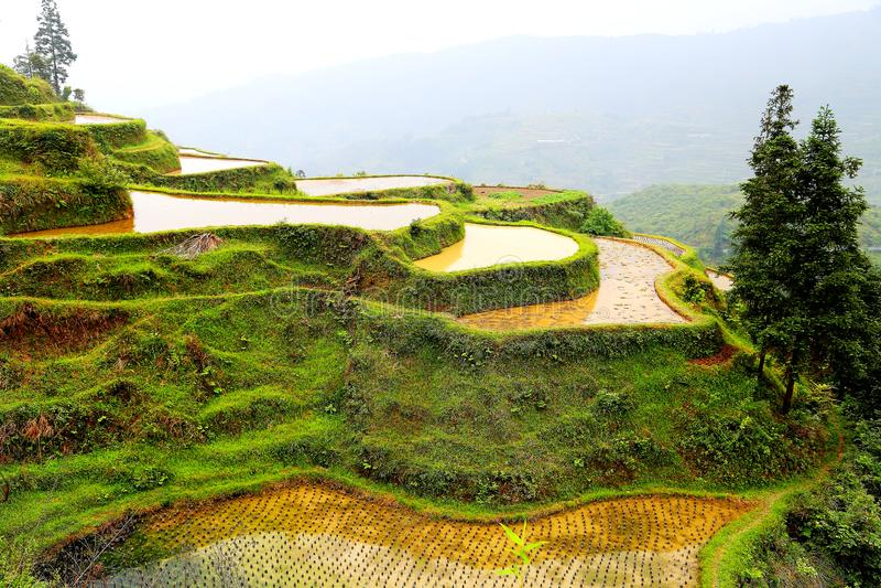 Gisement de riz de terrasse de Longji image stock