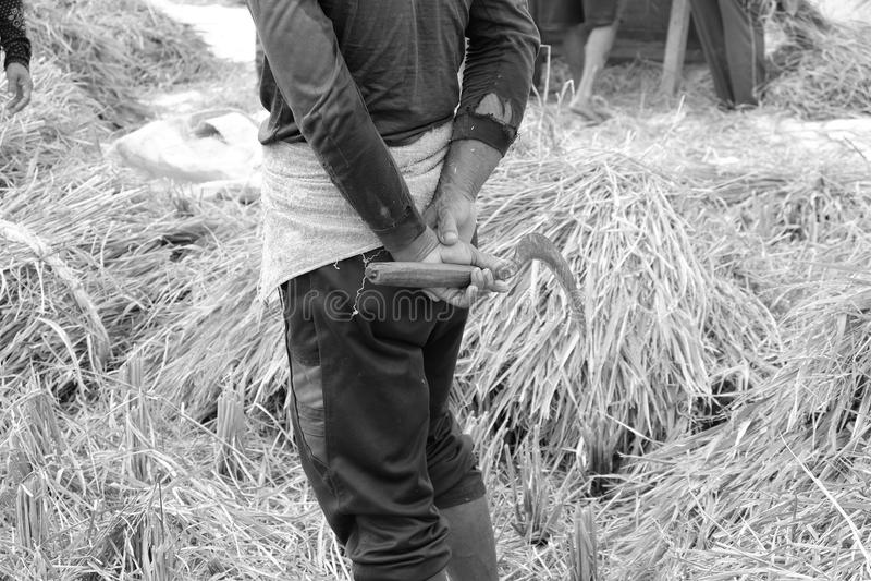 Gisement de riz, Ubud, Bali photos stock