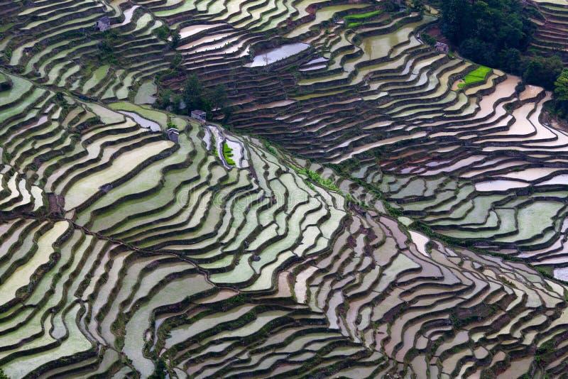 Gisement en terrasse de riz dans la saison de l'eau dans Yuanyang, Chine images libres de droits