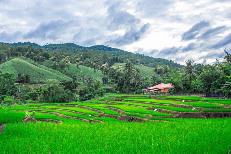 Gisement en terrasse de riz dans Maejam, Chiangmai, Thaïlande photos stock