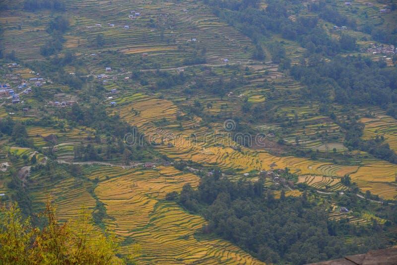 Gisement en terrasse de riz en montagnes de l'Himalaya du Népal image stock
