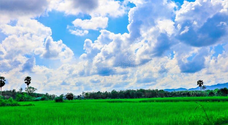 Gisement et ciel de riz images libres de droits