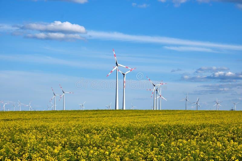 Gisement fleurissant de canola avec des générateurs d'énergie éolienne photographie stock libre de droits