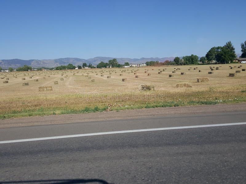 Gisement moissonné de foin dans le Colorado image stock