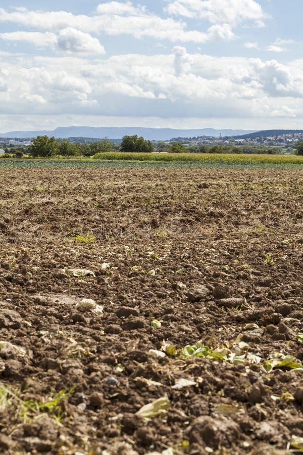 Gisement moissonné de pomme de terre avec la terre labourée avec un motoculteur image stock