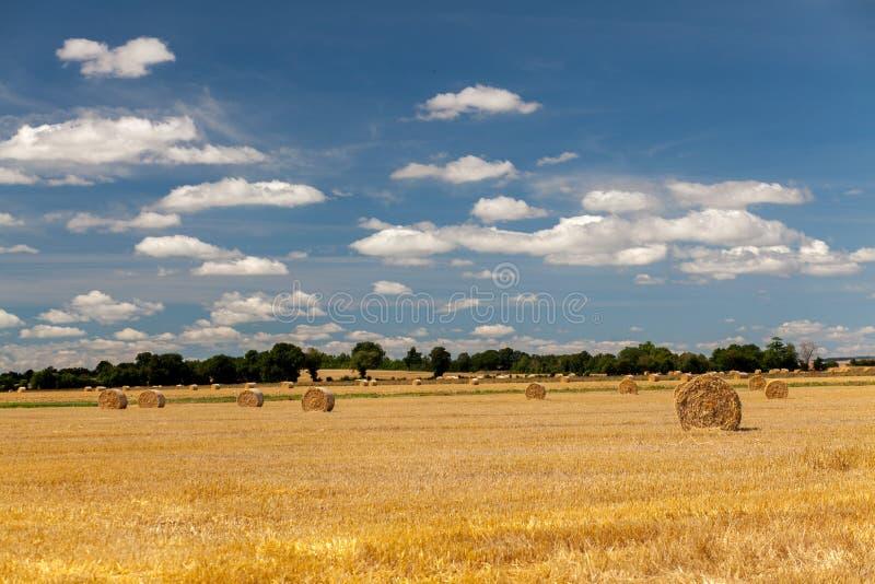 Gisements de foin en Normandie image libre de droits