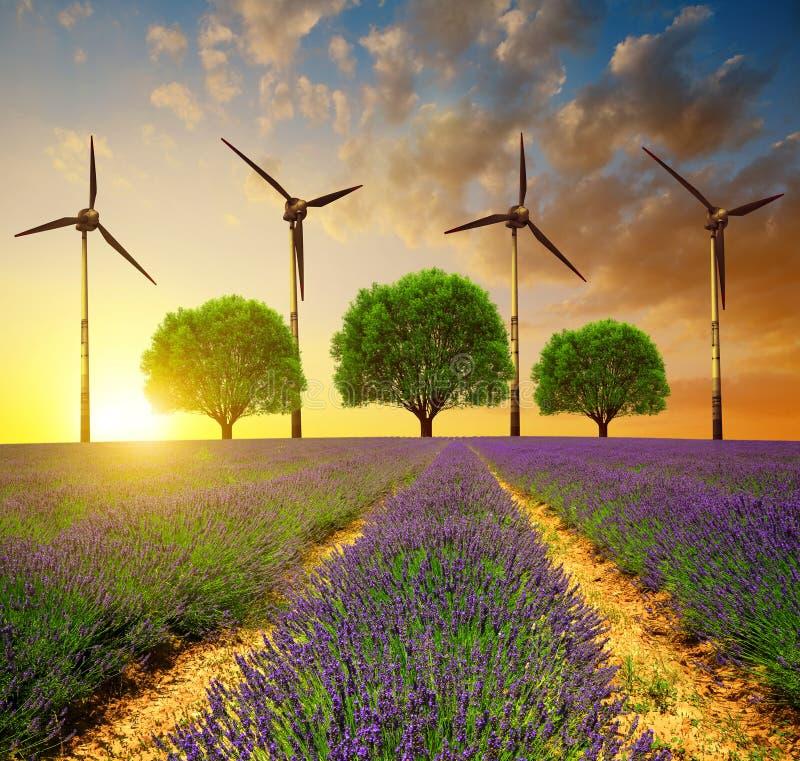 Gisements de lavande avec des arbres et des turbines de vent images libres de droits