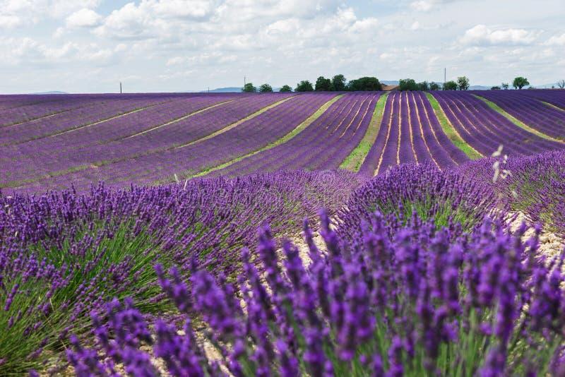 Gisements de lavande La Provence photos libres de droits