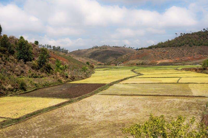gisements de riz et forêt tropicale, Madagascar photographie stock libre de droits
