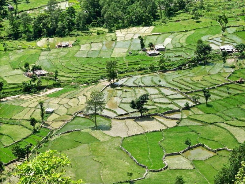 Gisements de riz, Népal central photographie stock
