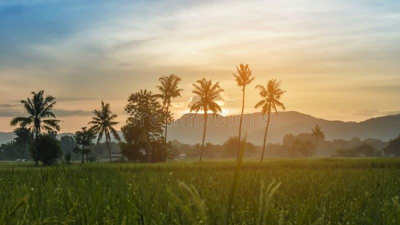 Gisements de riz pendant le matin image libre de droits