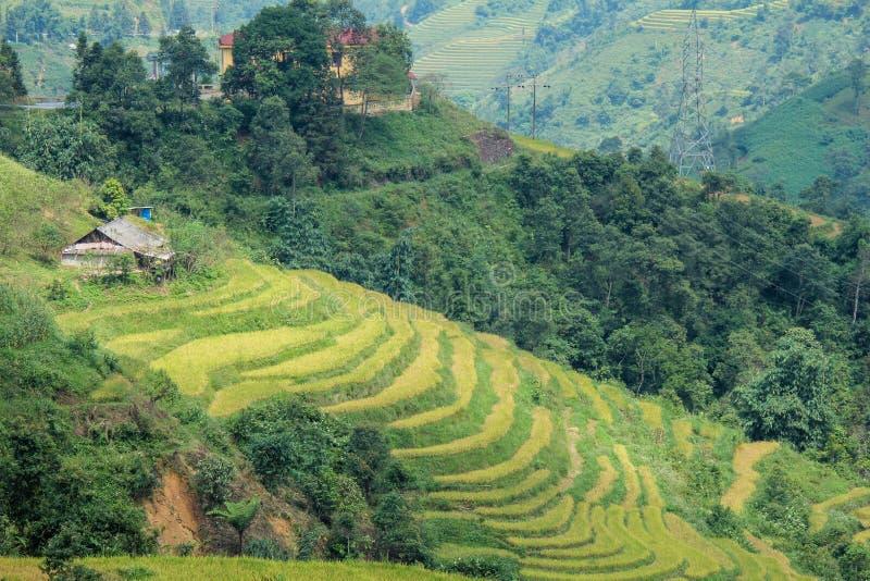 Gisements de riz sur en terrasse de Sapa Vietnam photographie stock libre de droits
