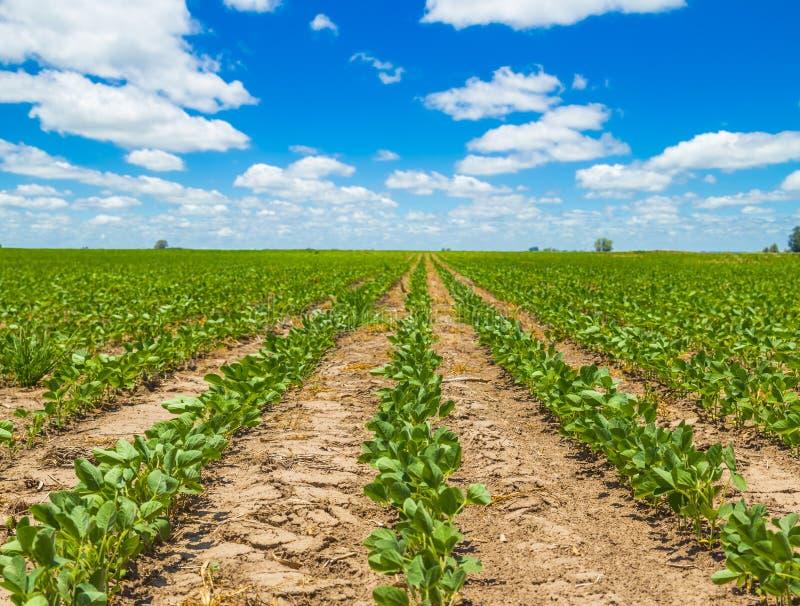 Gisements de soja image libre de droits
