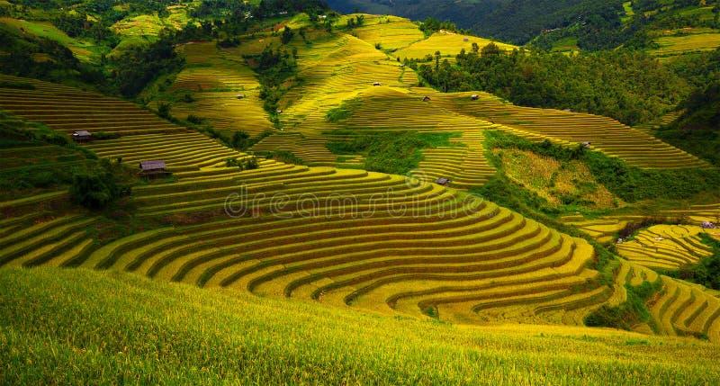 Gisements en terrasse de riz photo libre de droits