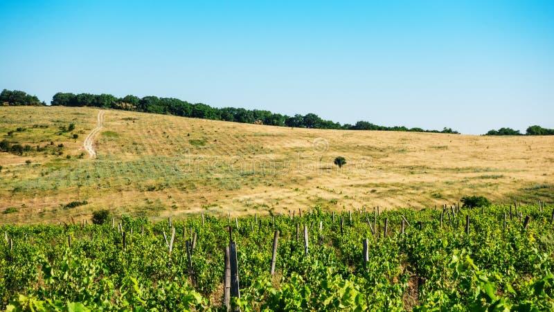 Gisements et flancs de coteau de raisin sur l'horizon photographie stock