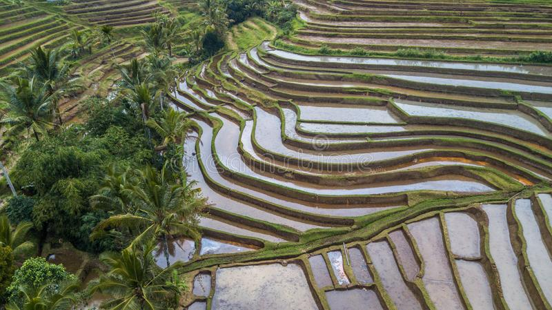 Gisements et terrasses boueux de riz photo stock