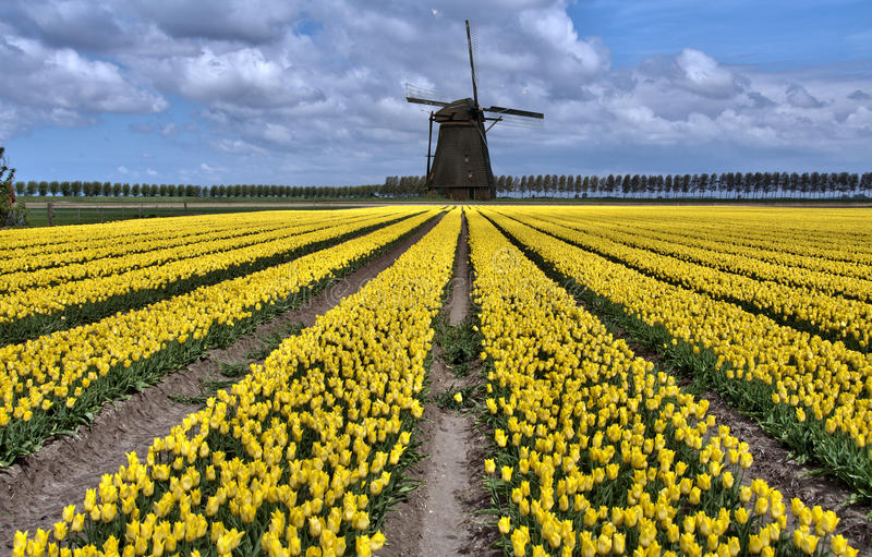 Gisements hollandais de moulin à vent et de tulipe photo libre de droits