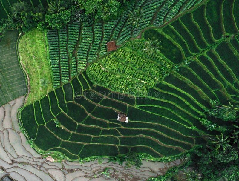 Gisements Terasering de riz dans Rancakalong Sumedang Java occidental image libre de droits