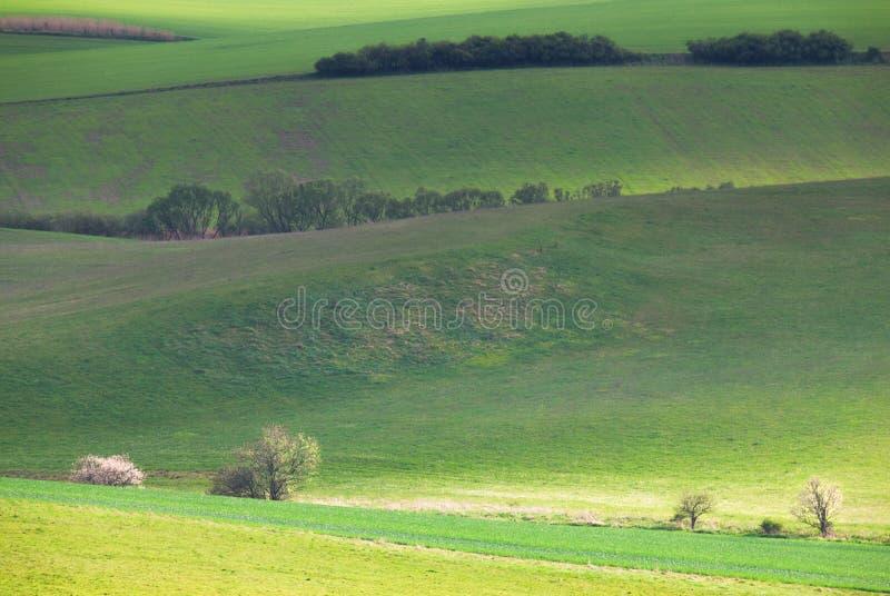 Gisements verts de source photographie stock libre de droits