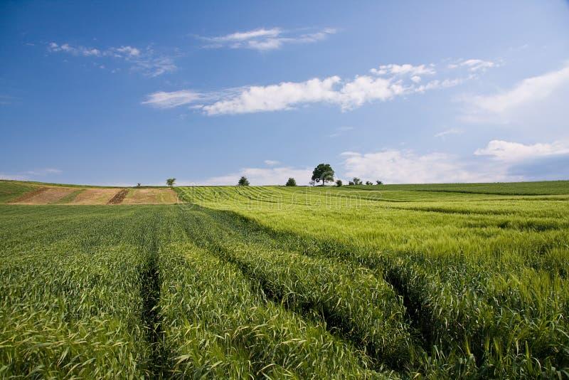 Gisements verts de source avec le ciel et les nuages d'arbre images libres de droits