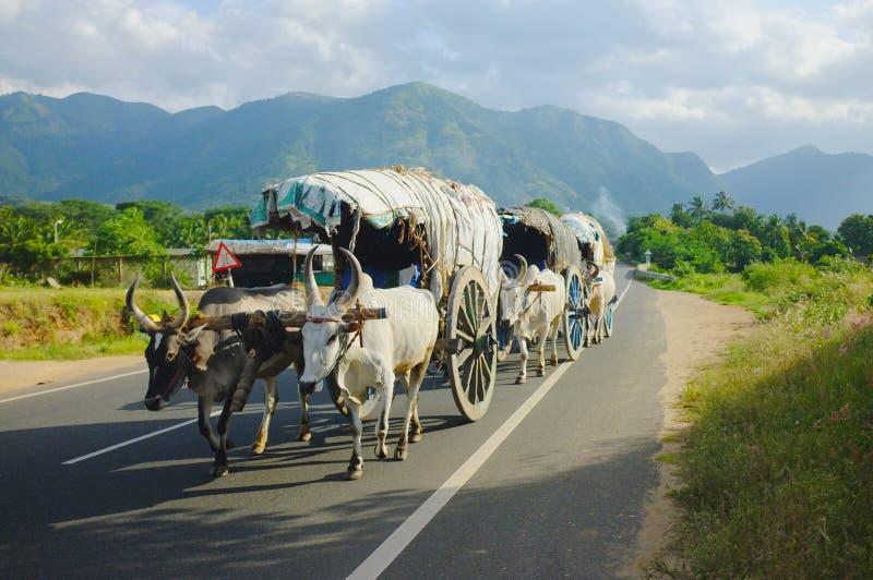 Gitans dans l'Inde du sud image libre de droits