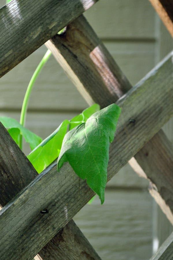 Gitter mit Rebnahaufnahme - Bild von Linien und von Schatten stockfotos