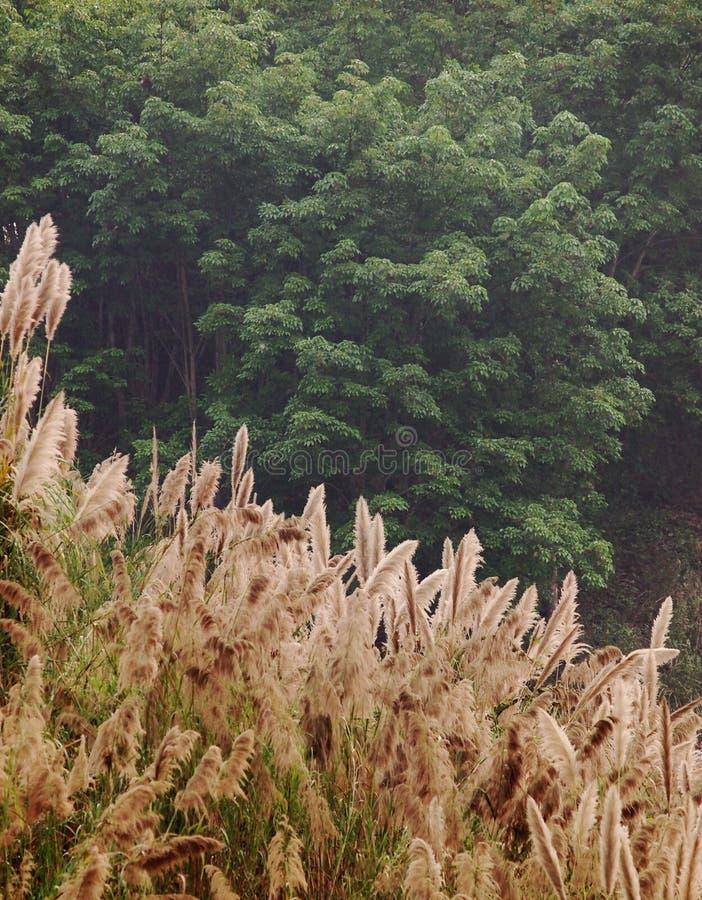 Download Giungla fotografia stock. Immagine di fiore, campo, contea - 55355214