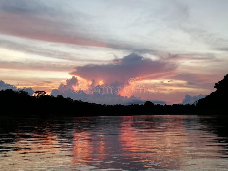 Giungla dell'Amazonas fotografie stock