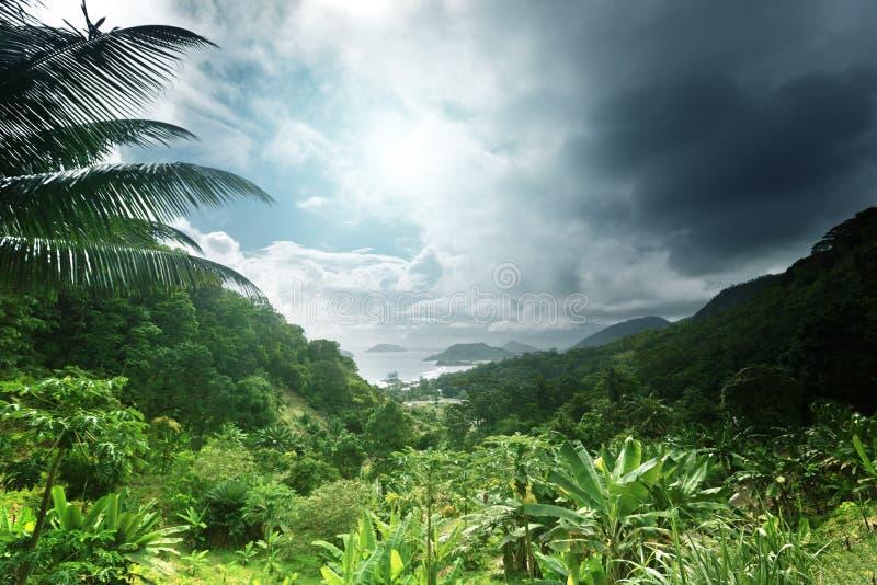 Giungla dell'isola delle Seychelles immagini stock libere da diritti