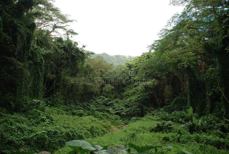 Giungla delle Hawai fotografie stock libere da diritti