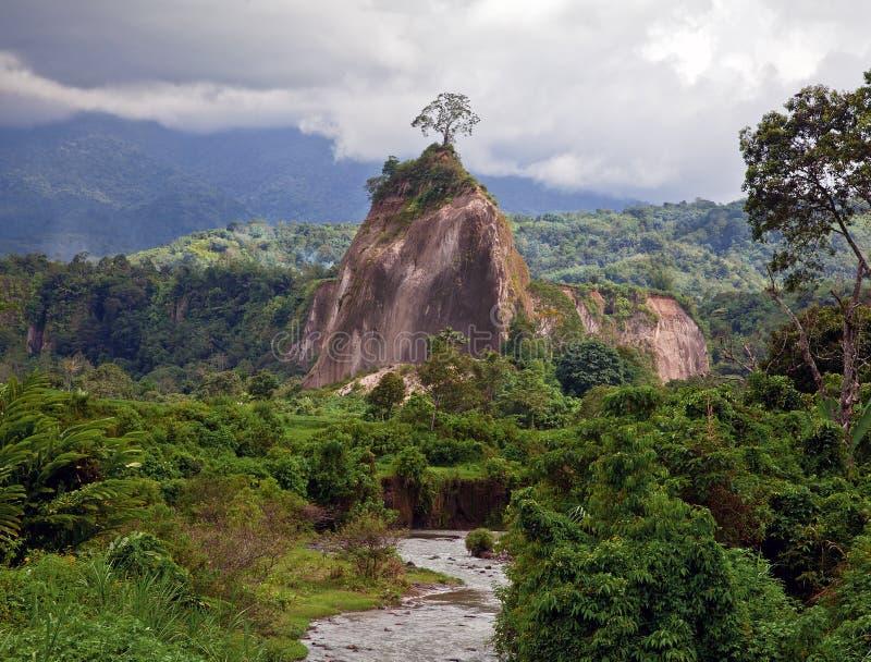 Giungla di Sumatra immagine stock