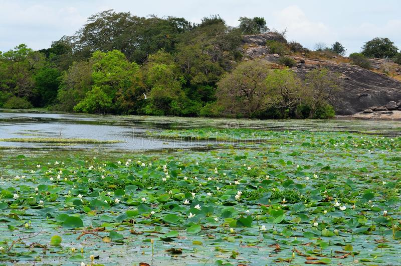 Giungla ed il lago, Srí Lanka immagini stock