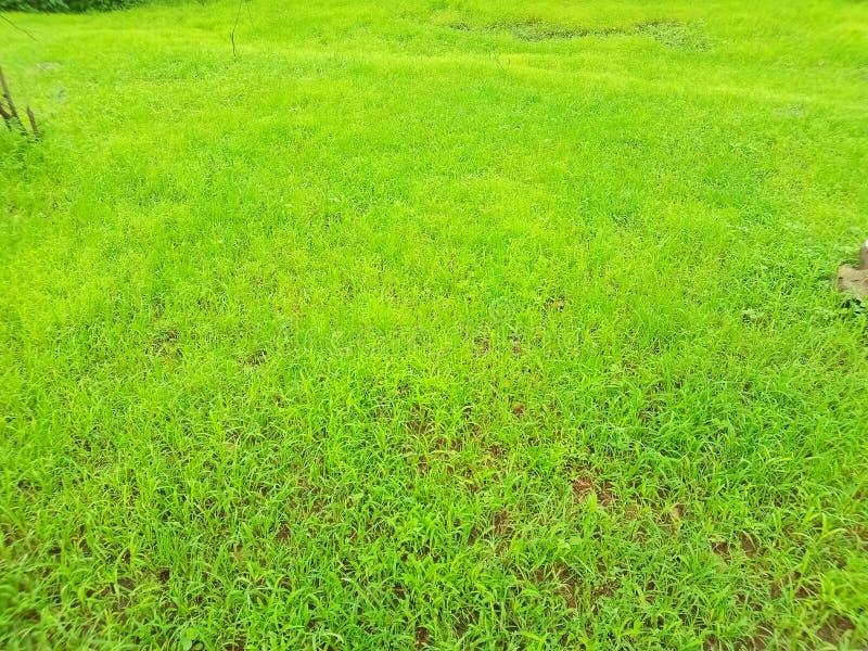 Giungla, foresta, piante, albero, erba, erba verde, alberi verdi, giardino del parco, pianta, azienda agricola immagini stock libere da diritti
