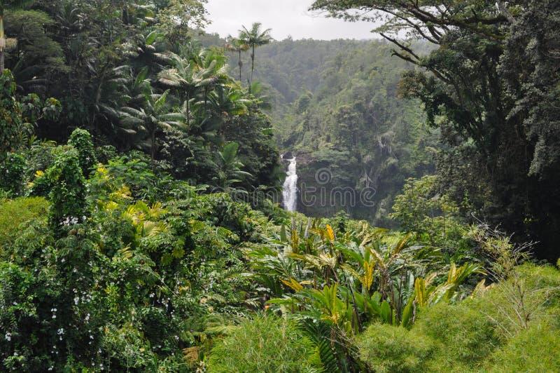 Giungla hawaiana fotografia stock