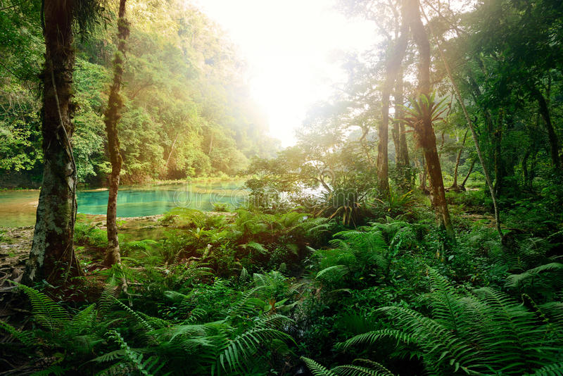 Giungla maya misteriosa nel parco nazionale Semuc Champey fotografia stock libera da diritti
