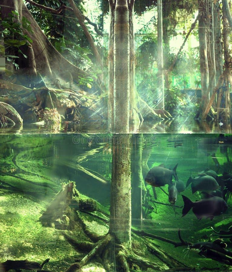 Giungla tropicale fotografie stock