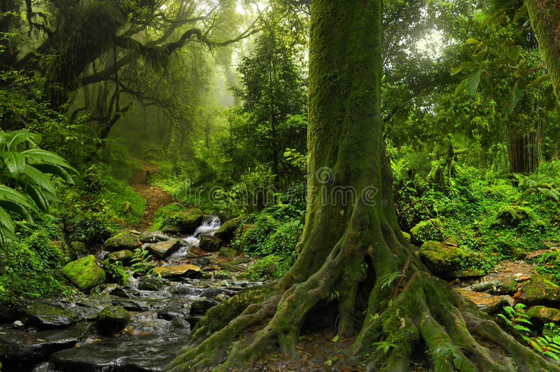 Giungla tropicale con il fiume fotografia stock