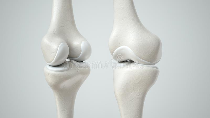 Giunto di ginocchio con la rappresentazione anteriore e retro- sana 3D della cartilagine, royalty illustrazione gratis
