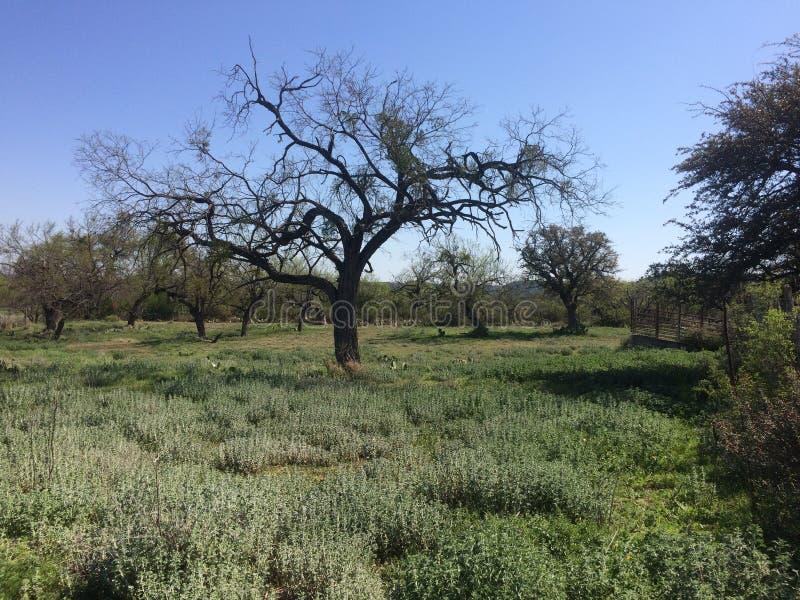 Giunzione del parco di stato del fiume South Llano, il Texas fotografie stock