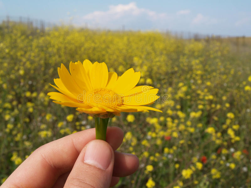 Download Give flowers stock photo. Image of nature, flower, spring - 13815416