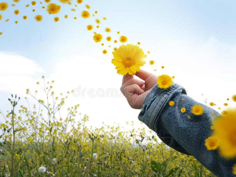 Download Give flowers stock image. Image of flowers, cyan, yellow - 23420469