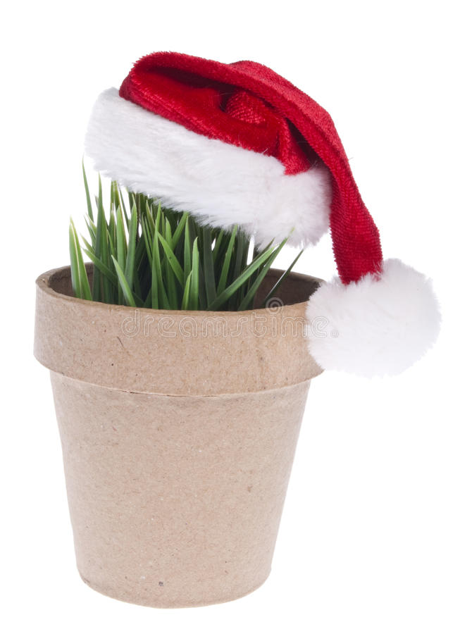 Download Give A Green Gift This Holiday Season Stock Photo - Image of studio, festive: 15255714