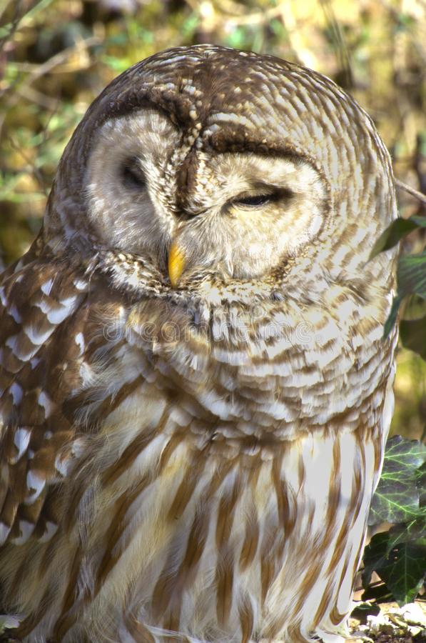 Give a hoot royalty free stock photography