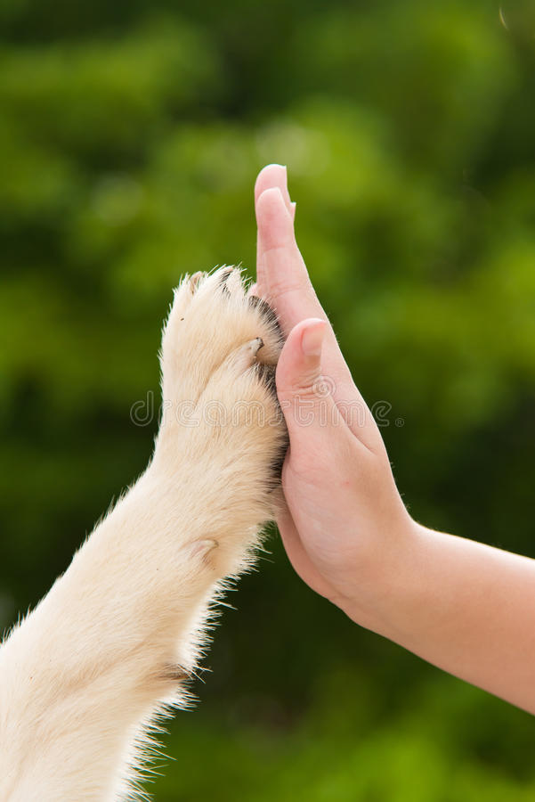 Give me five -Puppy pressing his paw against a Girl hand. On nature background royalty free stock images