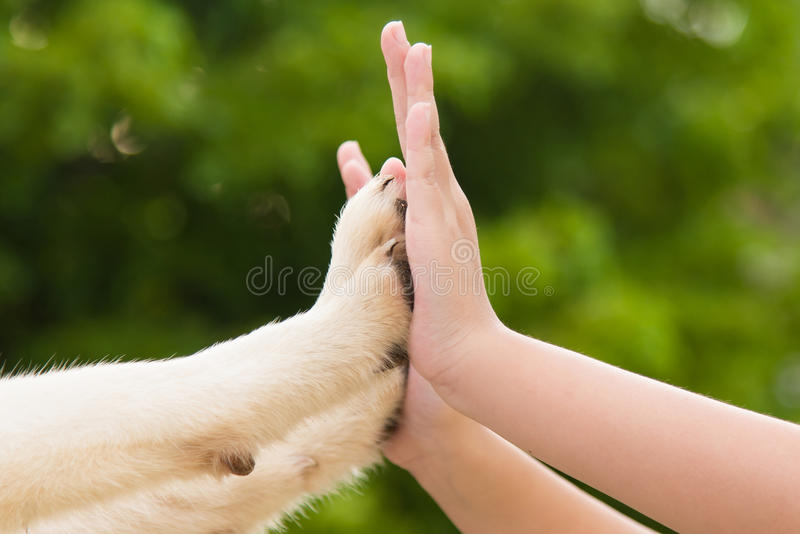 Give me five -Puppy pressing his paw against a Girl hand. On nature background royalty free stock photos