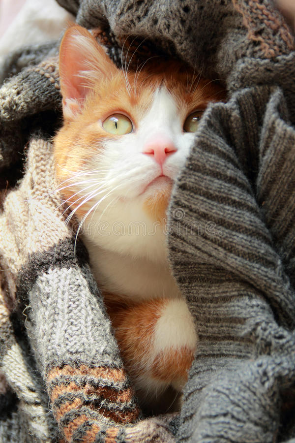 Give Me Shelter. Cute kitten peeping out from under the knitted blanket held in human hands