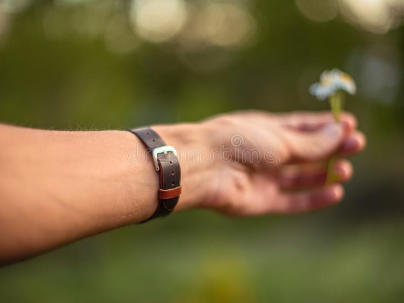 Hand wearing brown leather bracelet giving a daisy stock photo