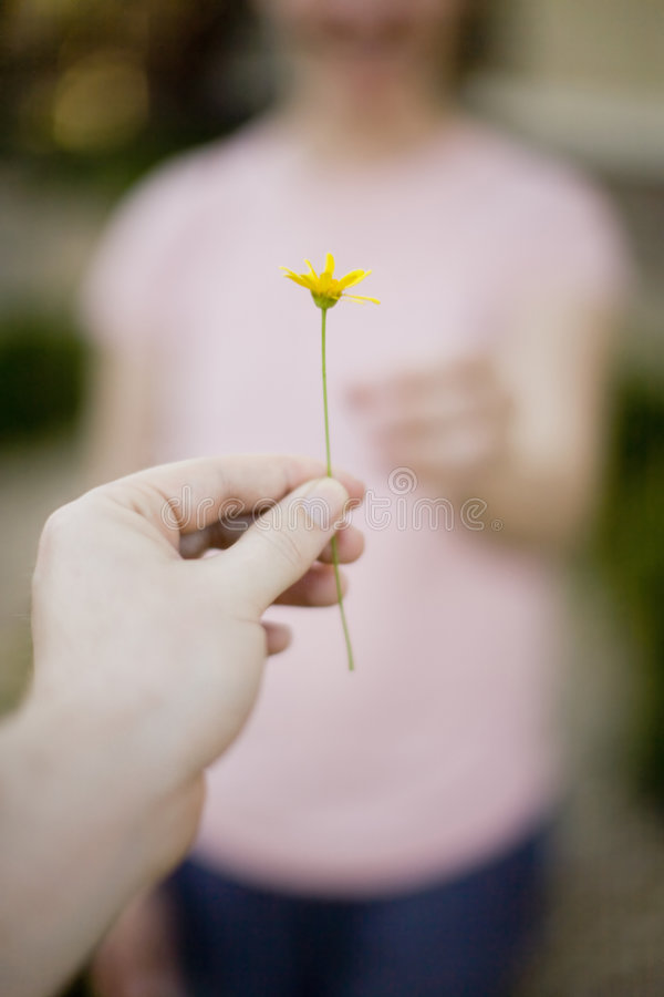 Giving flower. Man handing little yellow flower to woman royalty free stock image