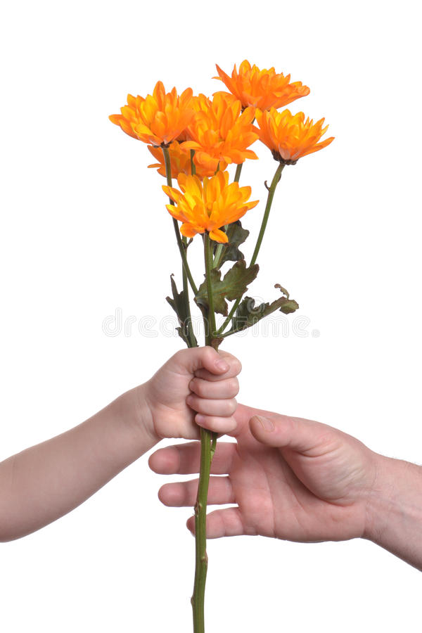 Download Giving Flowers stock image. Image of love, orange, family - 28953729